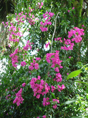 Pink flowers in the rainforest akashic records reading
