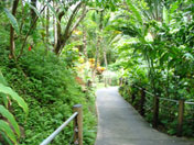 Path through the rainforest akashic record readings